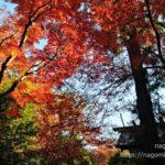 【八王子】滝山城跡・都立滝山公園【多摩散歩】