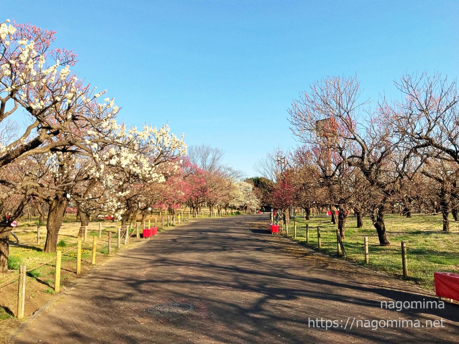 府中郷土の森で梅花見